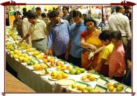Variety+of+mangoes+in+india
